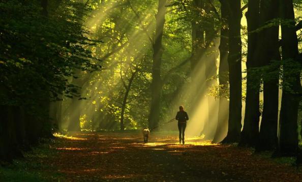 run-in-the-woods