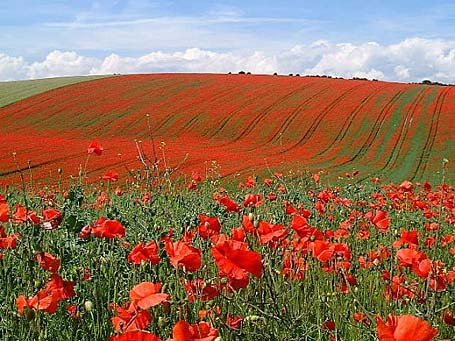 Poppies, Rations and Remembrance