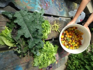 Harvest-picnic