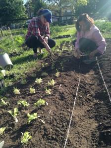 June-5-planting-05
