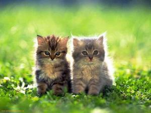 blog kitten 2