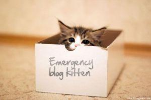 blog kitten