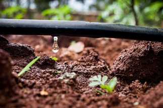 Photo-by-Fintrac-Drip-Irrigation-Technology-is-a-Solution-for-Many-Smallholder-Farmers