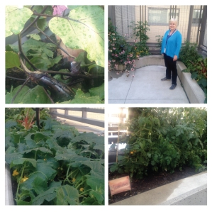 Deb (pictured) and Willie, Danielle and Amy, the garden maven team spearheaded the rooftop garden on 5 South Geriatric Psychiatry Unit, thriving in its 2nd year