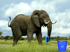 elephant recycling