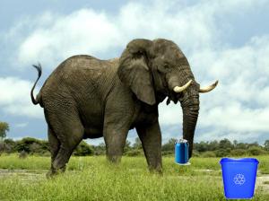 elephant recycling