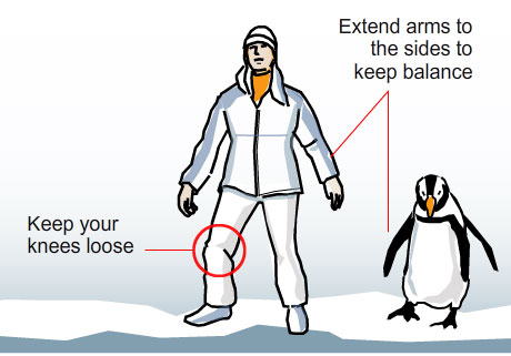 Tips from the penguins on how to walk on snow and ice. Click the pic for the full graphic from the Boston Globe