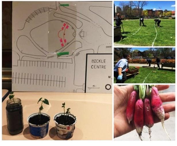 garden pics-collage-planning-build.jpg