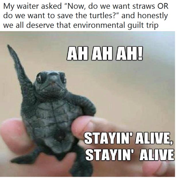 turtle straw
