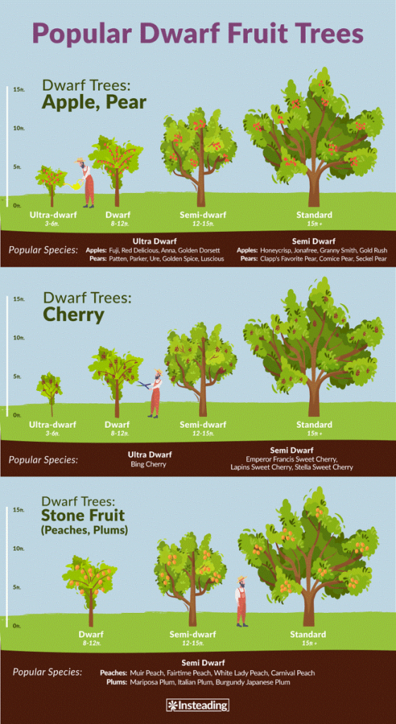 Dwarf Fruit Trees • Insteading