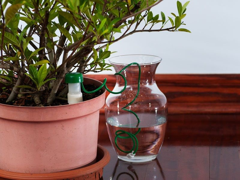 hydrospike-plant | Plants, Water plants, Free plants
