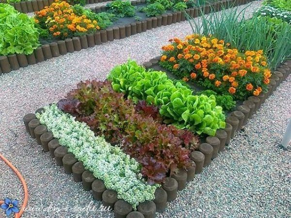 Amazing ideas to intercropping vegetables and flowers together ...